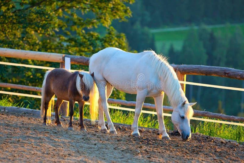 Cavalo e potro imagem de stock