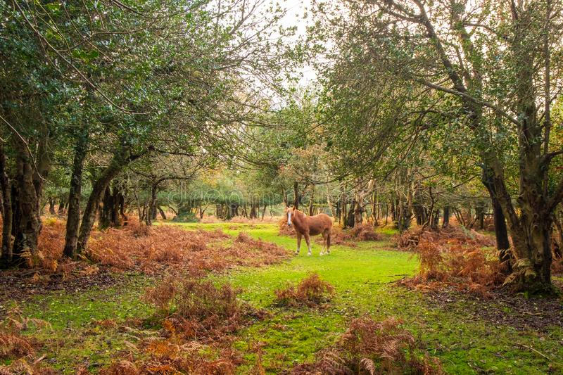 Cavalo em Forest Clearing imagens de stock royalty free