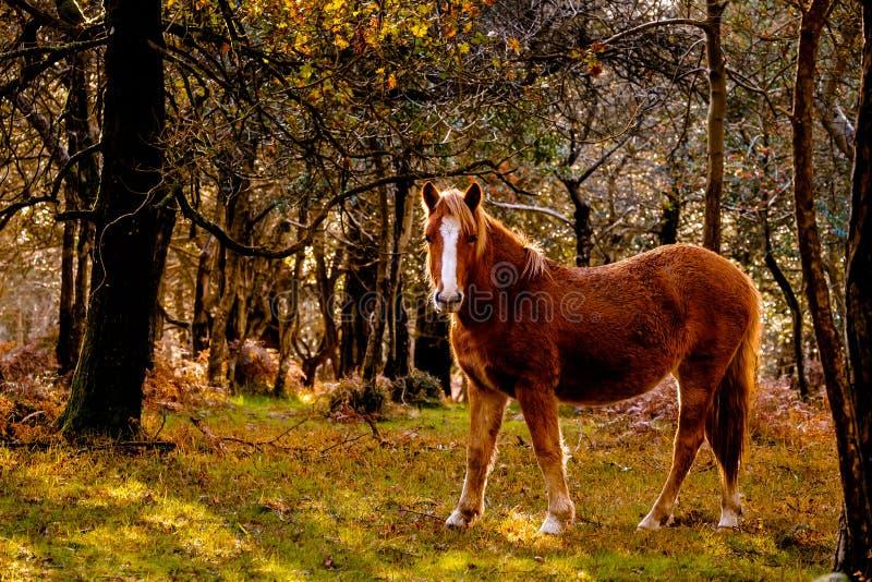 Cavalo em Forest Clearing fotos de stock