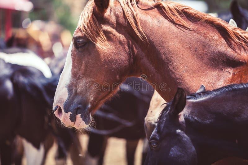 Cavalo em um rancho fotografia de stock royalty free