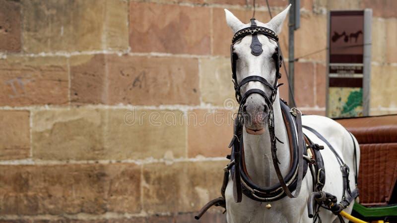 Cavalo espanhol usado para levar turistas em torno de Malaga imagens de stock