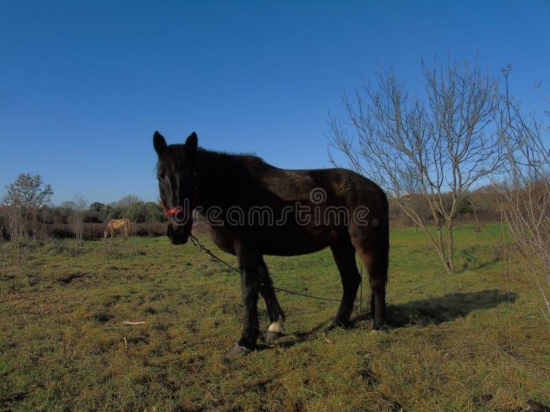 Cavalo lindo fotografia de stock royalty free