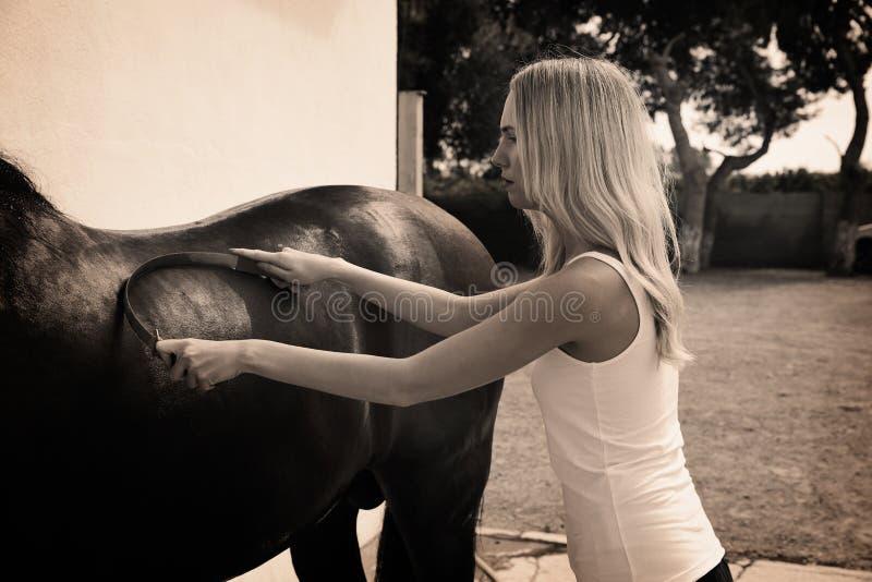 Cavalo louro da limpeza da menina com raspador do suor imagem de stock royalty free