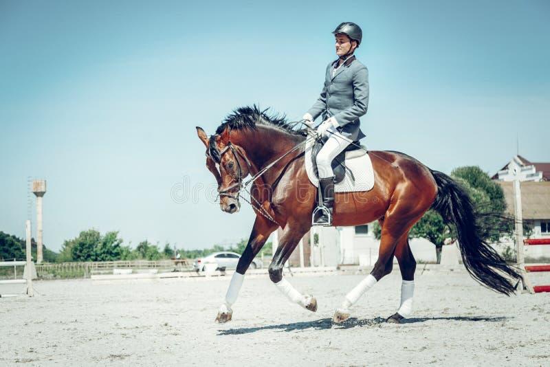 Cavalo marrom bonito agradável que corre muito rapidamente imagem de stock royalty free