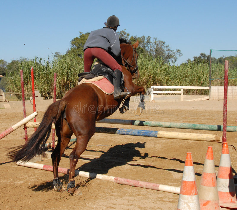 Cavalo marrom de salto foto de stock royalty free