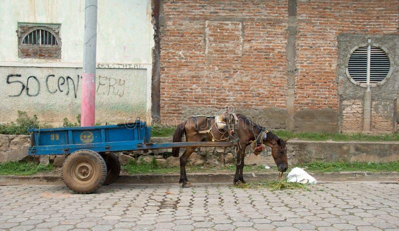 Cavalo morrendo de fome do trabalho foto de stock