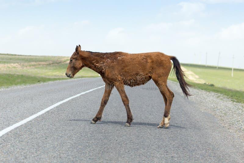 Cavalo na estrada fotografia de stock