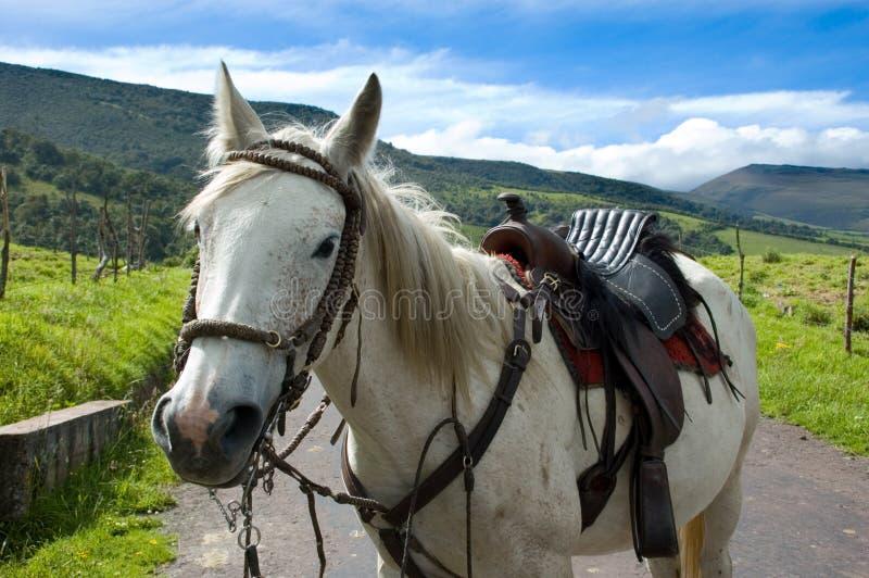 Cavalo na estrada fotos de stock royalty free