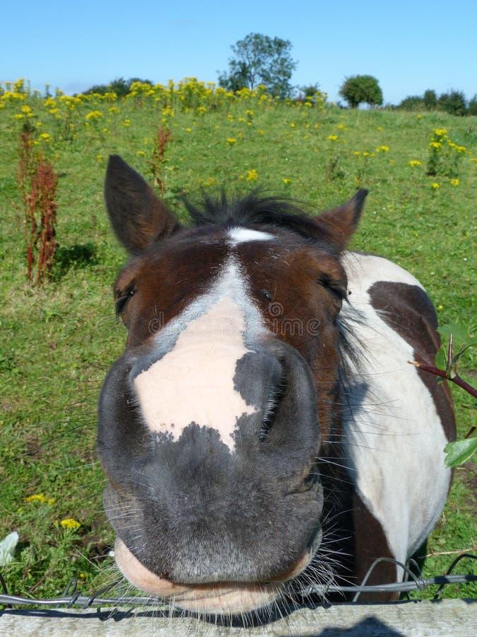 Cavalo na Irlanda fotografia de stock