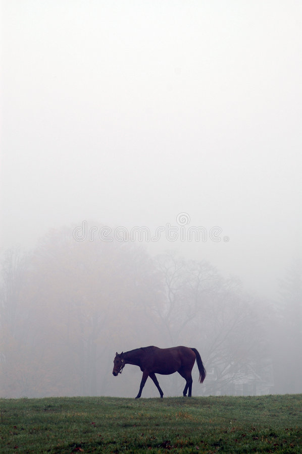 Cavalo na névoa fotografia de stock