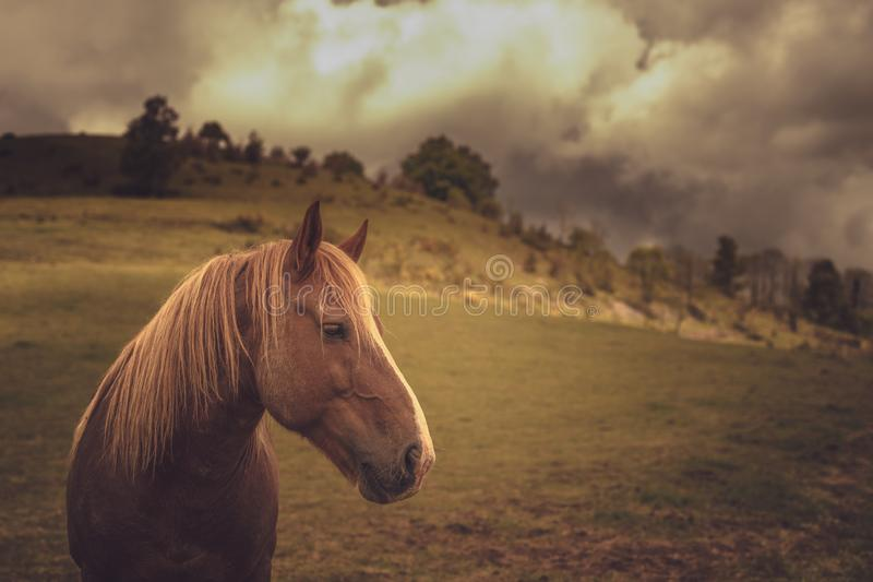 Cavalo na natureza imagens de stock