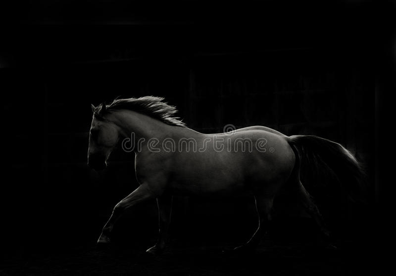 Cavalo na obscuridade foto de stock