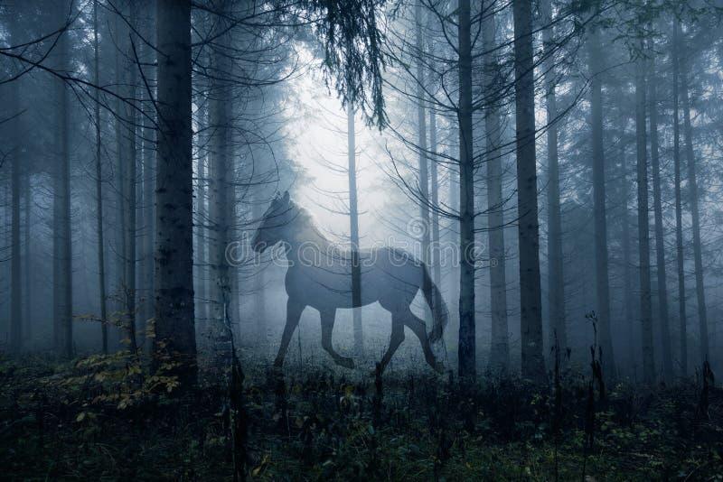 Cavalo na paisagem escura da floresta da fantasia fotografia de stock royalty free
