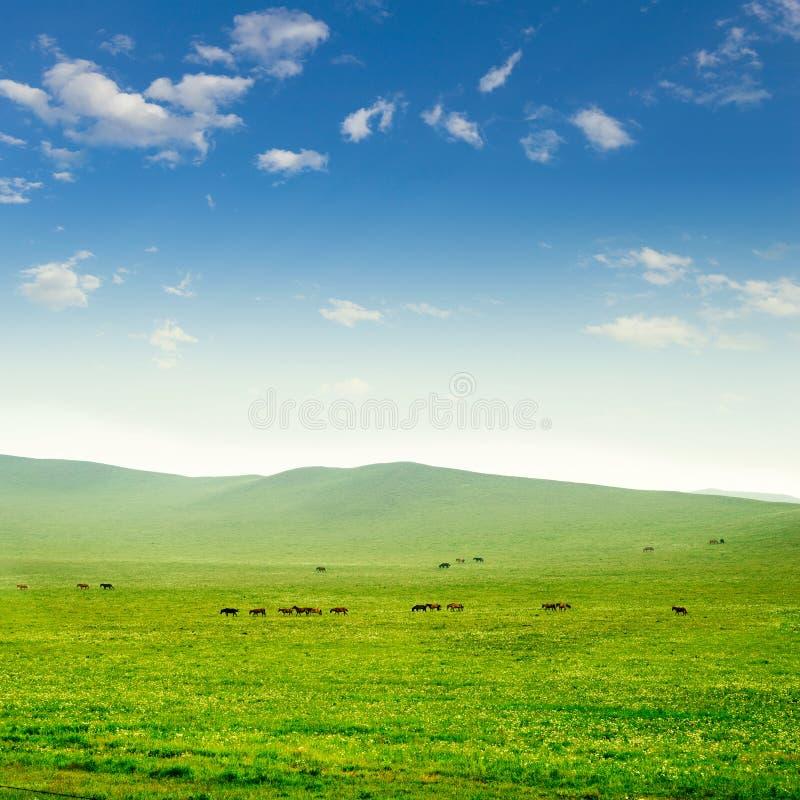 Cavalo na pastagem imagem de stock