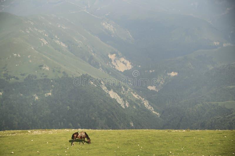 Cavalo nas montanhas fotografia de stock
