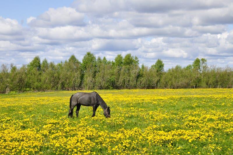 Cavalo no campo fotografia de stock