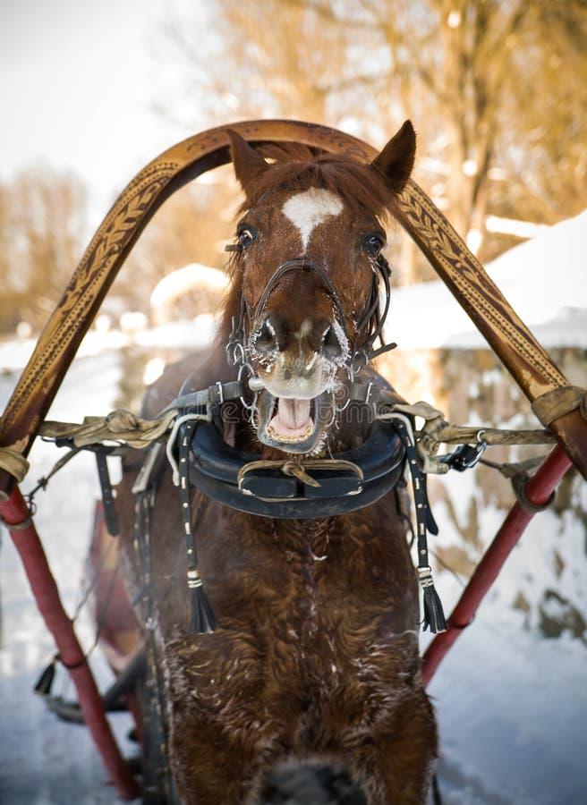 Cavalo no chicote de fios