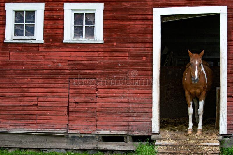 cavalo no estábulo foto de stock