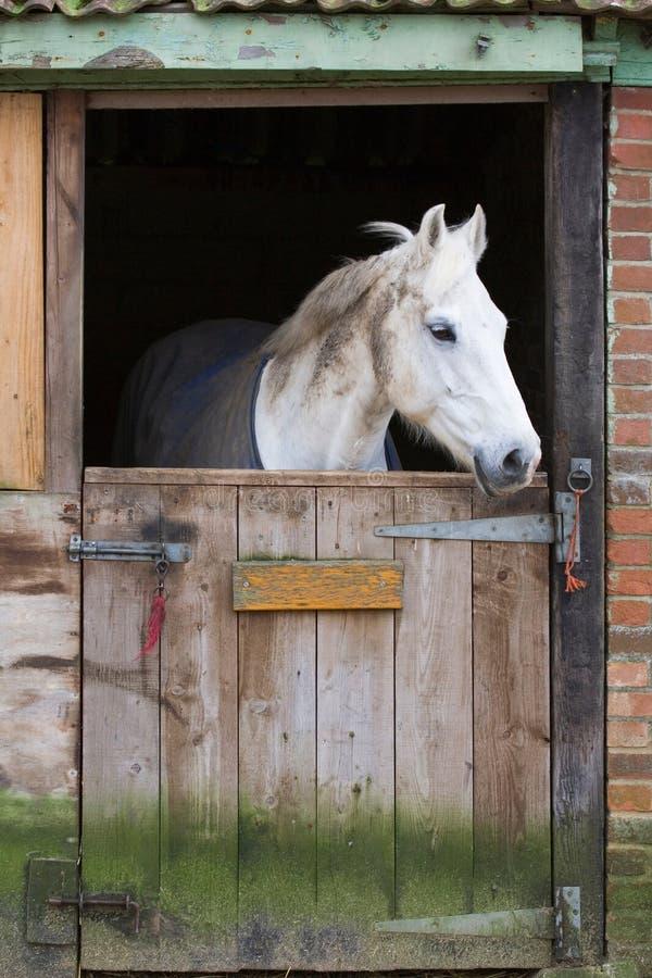Cavalo no estábulo fotos de stock royalty free