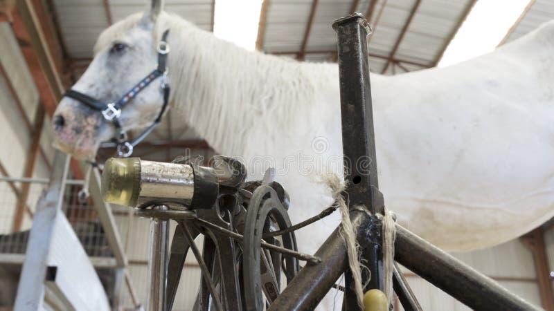 Cavalo no estábulo com suporte do farrier imagens de stock royalty free