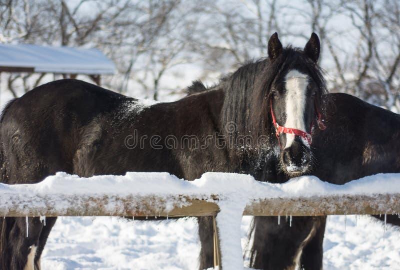 Cavalo no inverno fotos de stock