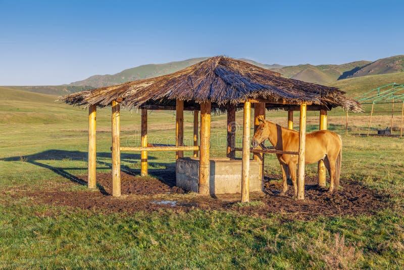 Cavalo no miradouro Platô da montanha alta do Assy, Cazaquistão fotos de stock royalty free