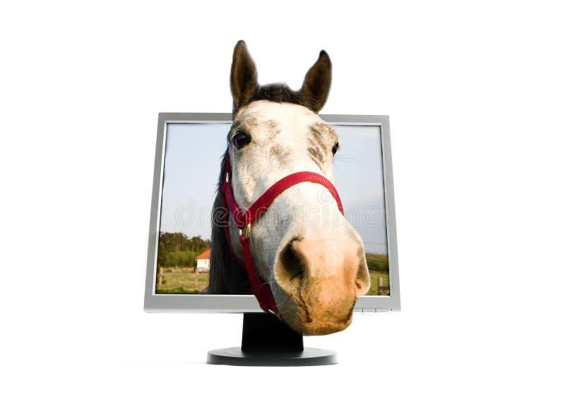 Cavalo no monitor de TFT fotografia de stock royalty free