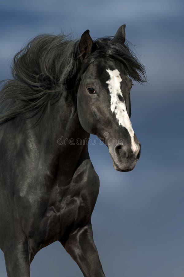 Cavalo no movimento imagens de stock