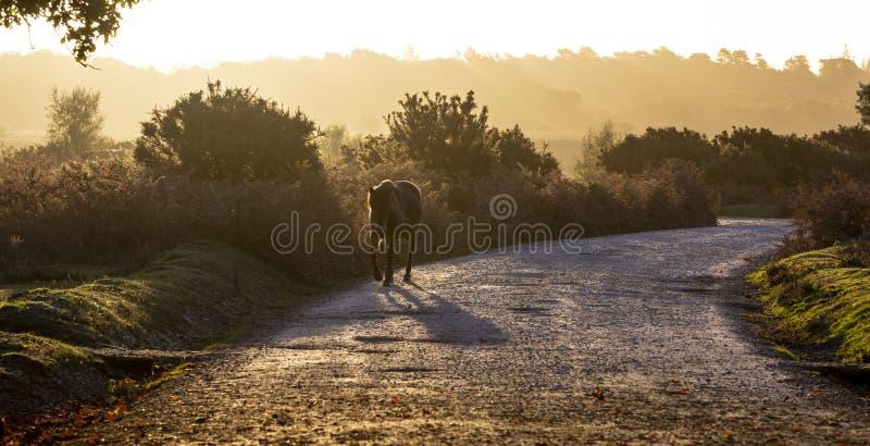 Cavalo no movimento na floresta nova fotografia de stock