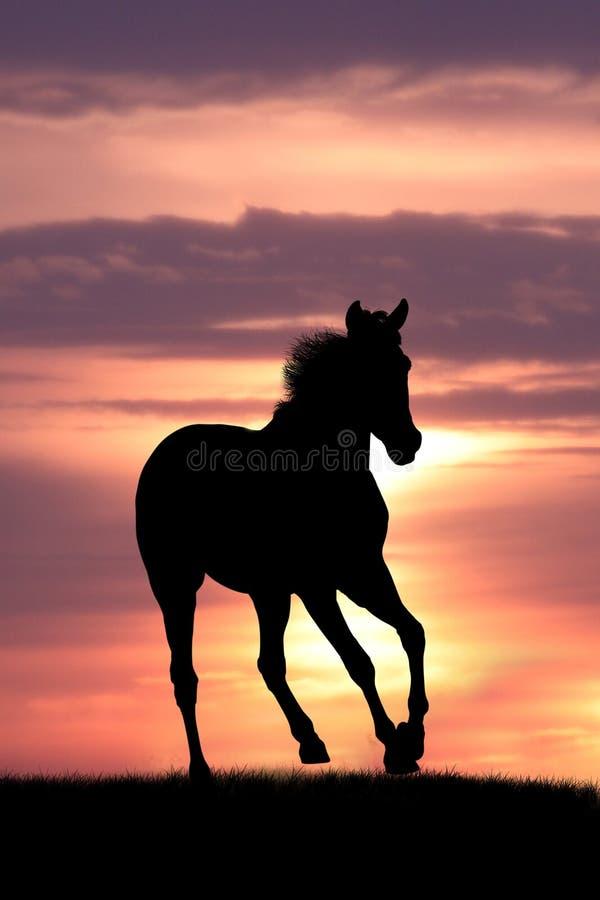 Cavalo no nascer do sol imagens de stock