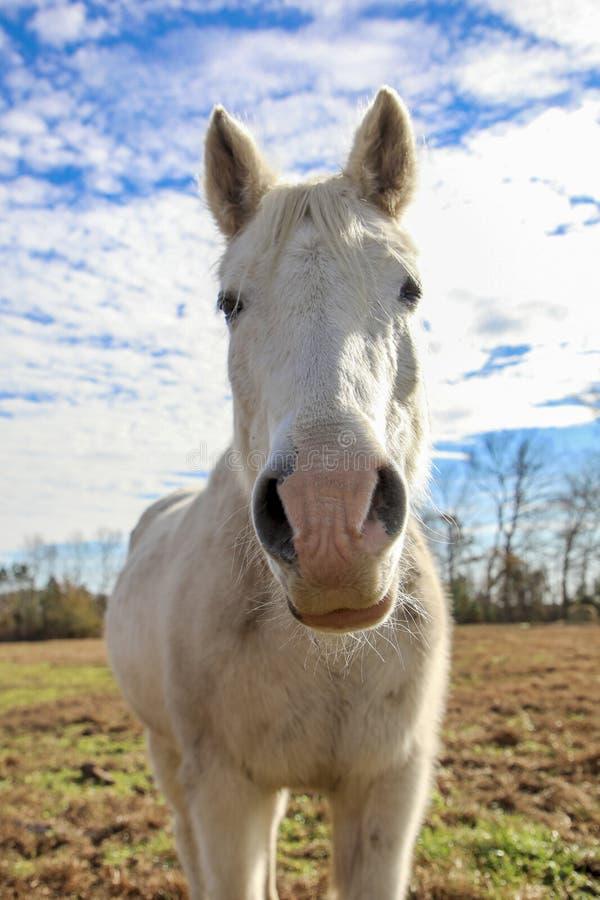 Cavalo no pasto imagem de stock