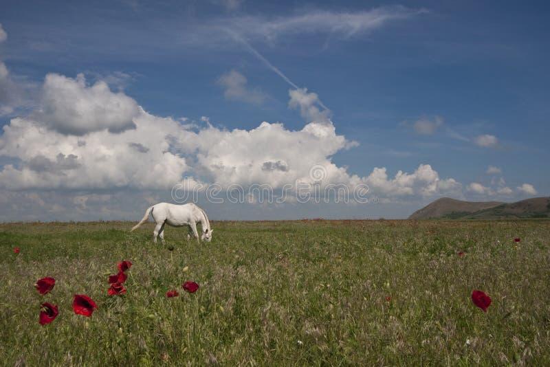 Cavalo no pasto fotos de stock royalty free