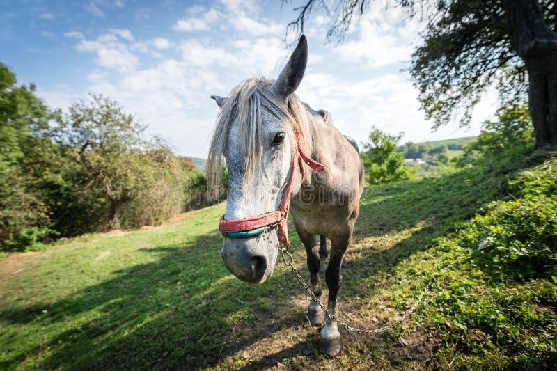 Cavalo no pasto imagem de stock royalty free