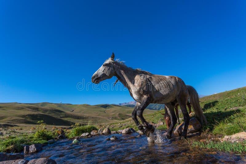 Cavalo no pasto da montanha fotografia de stock