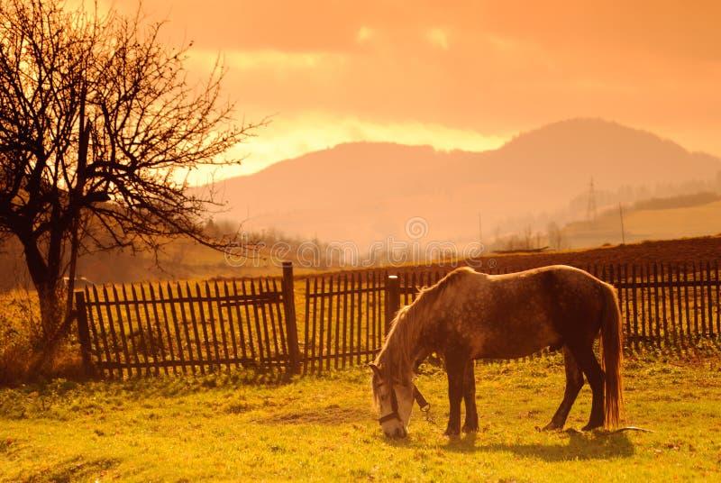 Cavalo no pasto no fulgor de noite fotografia de stock royalty free