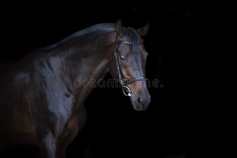 Cavalo no preto foto de stock royalty free