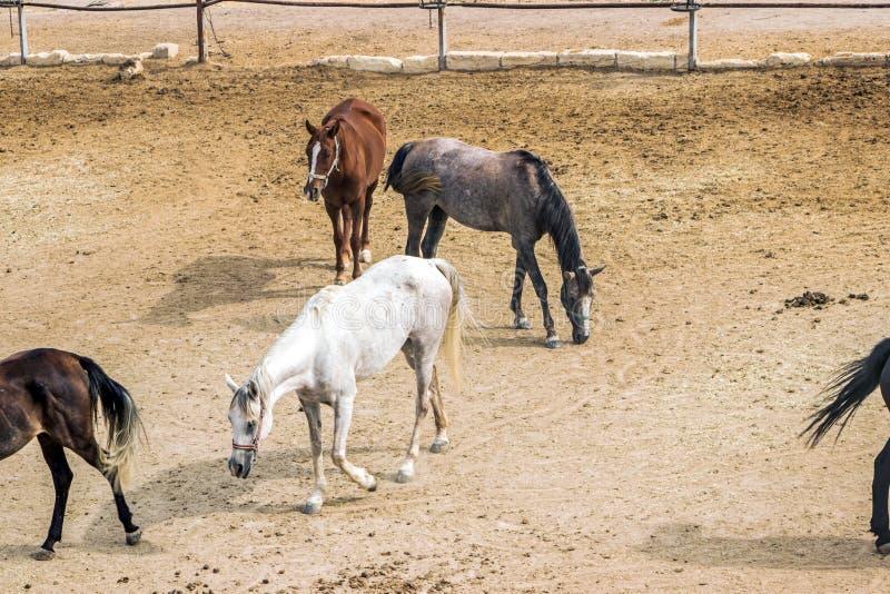Cavalo no rancho em Cappadocia imagem de stock royalty free