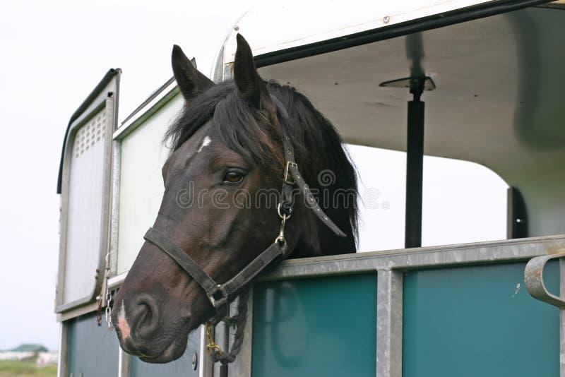 Cavalo no reboque imagem de stock