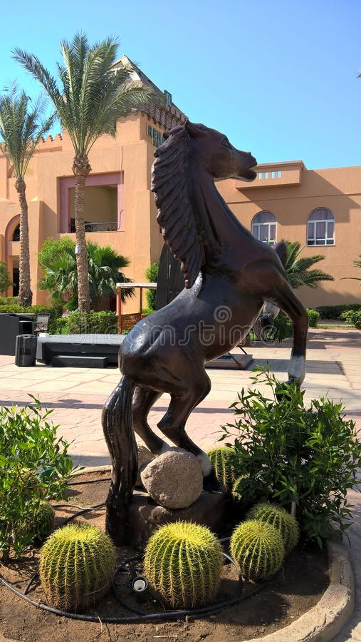 Cavalo no recurso real Sharm El Sheikh do rehana fotografia de stock royalty free