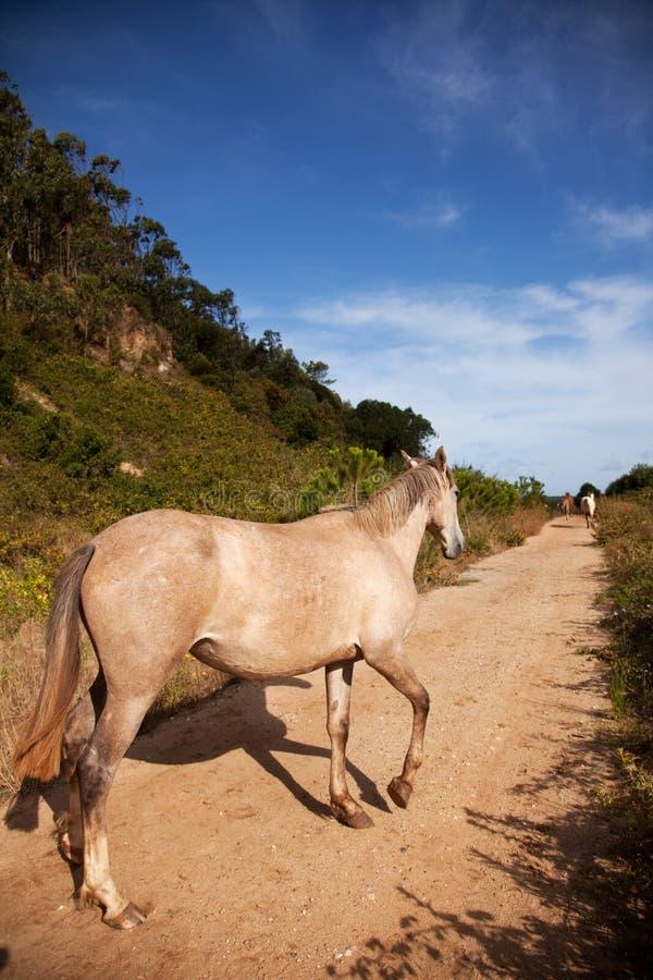 Cavalo no trajeto imagem de stock