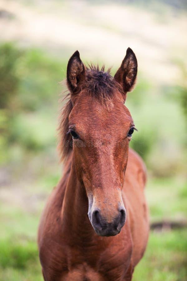 Cavalo novo imagem de stock royalty free