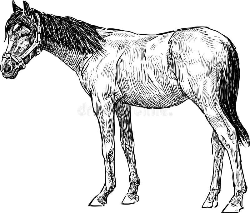 Cavalo novo ilustração stock
