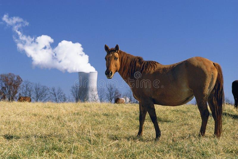 Cavalo perto da central energética nuclear fotografia de stock royalty free