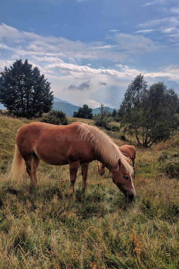 Cavalo perto do lago fotografia de stock
