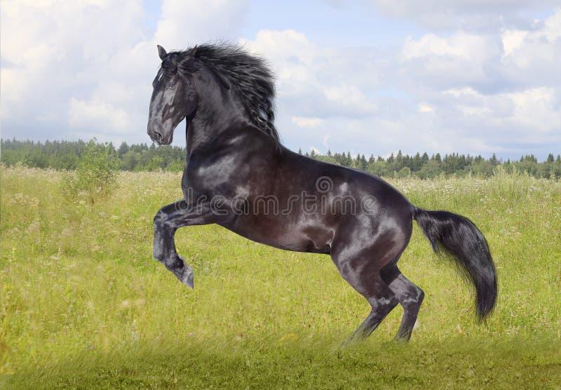 Cavalo preto fotografia de stock