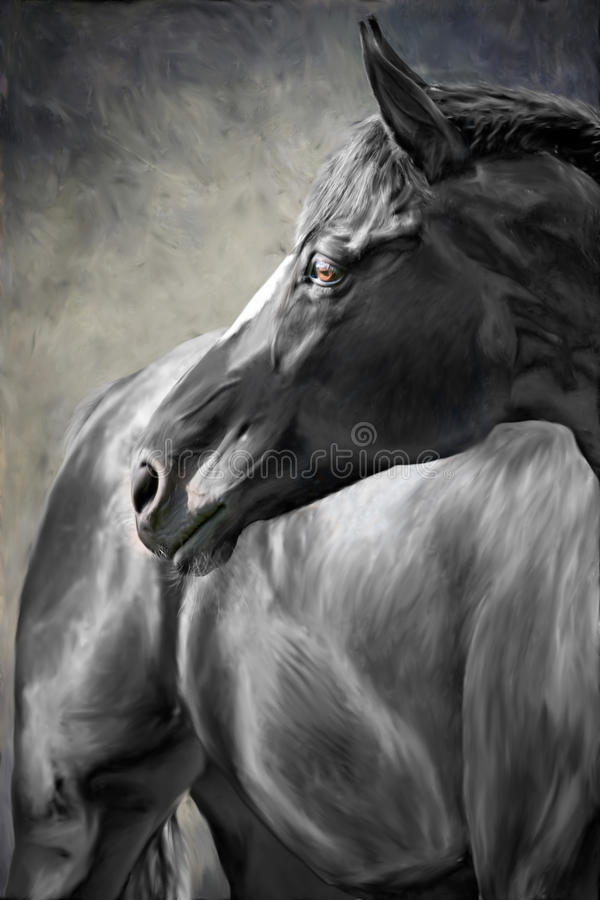 Cavalo preto fotos de stock royalty free