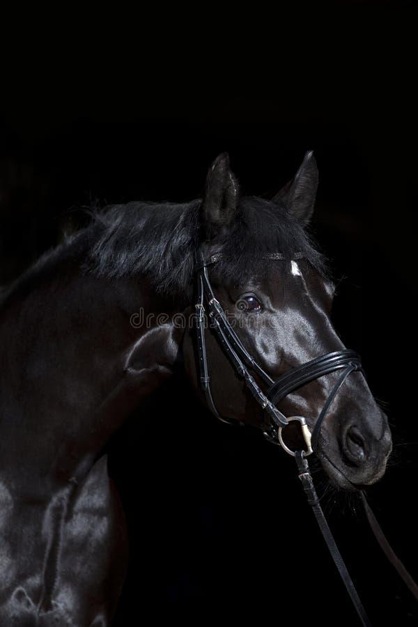 Cavalo preto no fundo preto imagens de stock