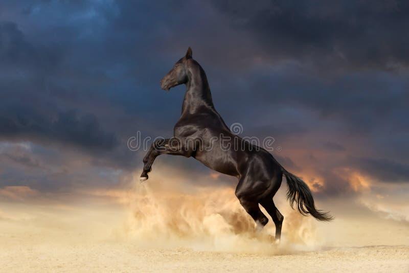 Cavalo preto que eleva acima imagem de stock