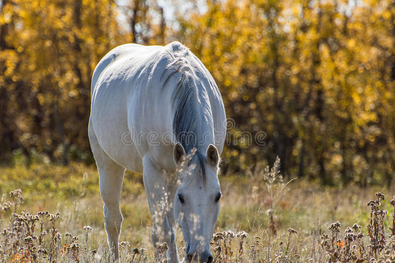 Cavalo que aprecia a manhã Sun imagens de stock