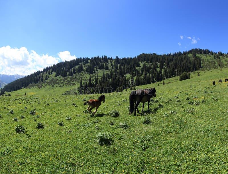 Cavalo que come a grama imagens de stock royalty free